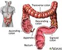 Large intestine (colon)