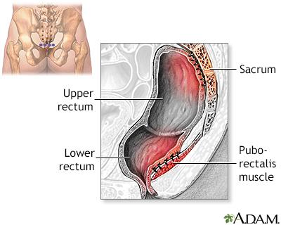 Anatomy image anus located tailbone